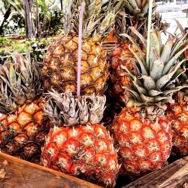 Fresh Pineapples on the Street Carts of Old Havana