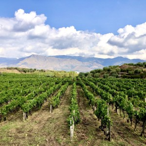 Donnafugata Wines Mount Etna