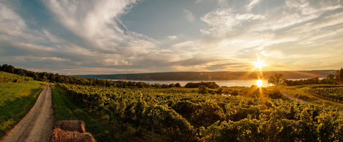 The Charm Of New York Finger Lakes Rieslings
