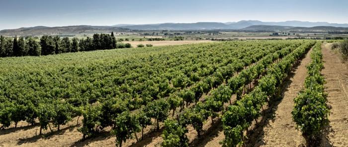 Vineyard Site Iscrabilis Pala Wine