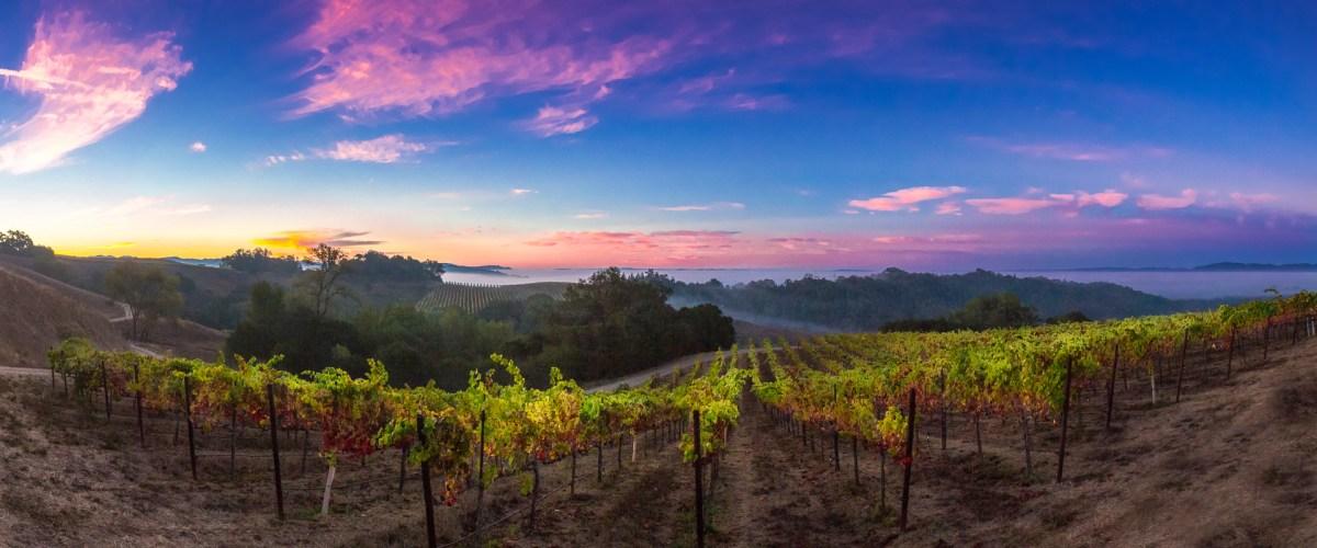 Balverne Wines – Refreshing Summer Releases