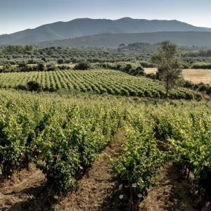 Pala Wines - Sardinia