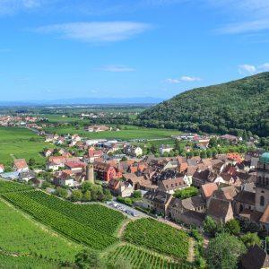 Alsace Rieslings