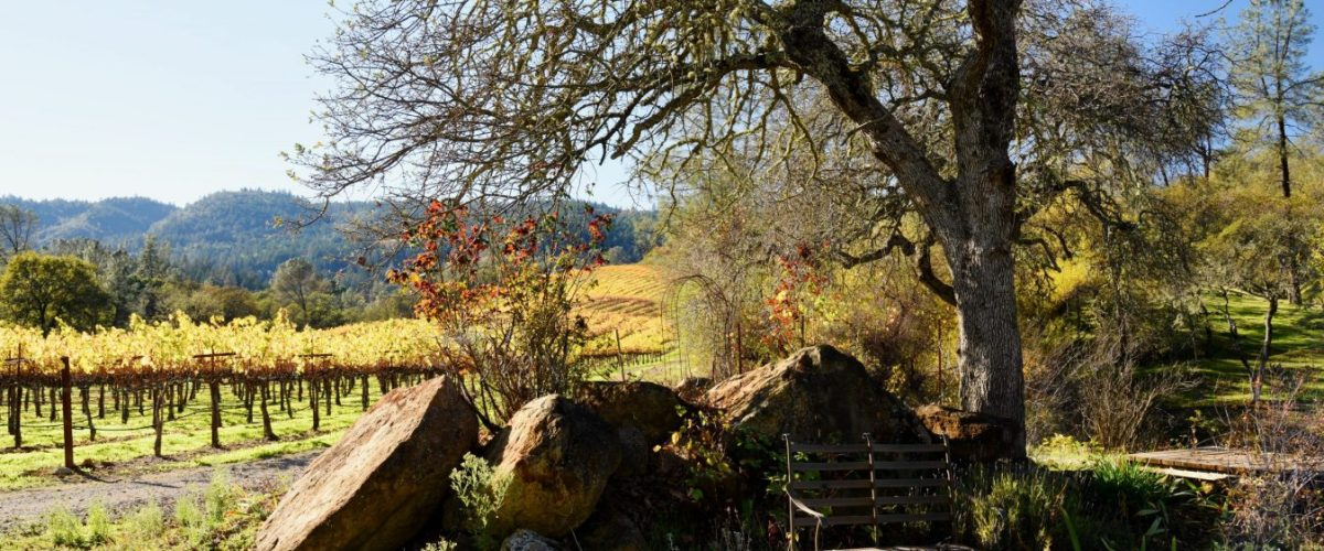 Calla Lily Winery – A Boutique Napa Valley Winery Off The Beaten Path