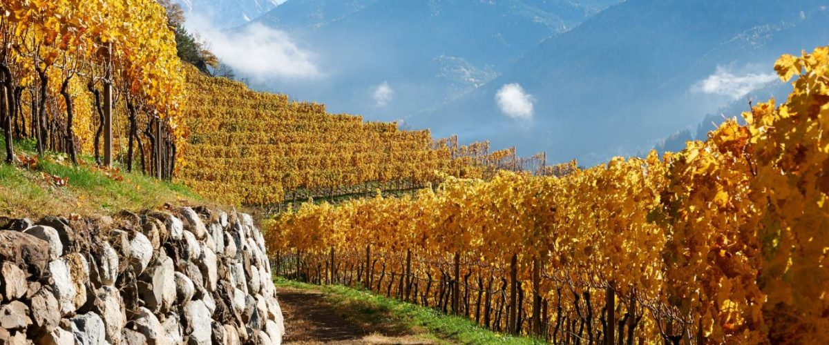 Cantina Valle Isarco – Riccardo Cotarella Presents The Stunning Kerner And Sylvaner of Valle Isarco