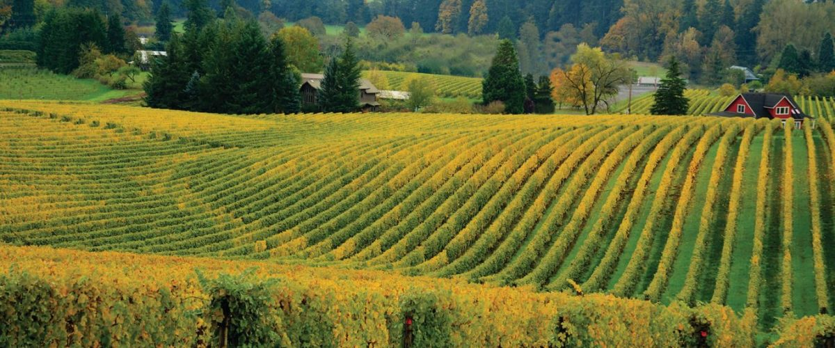 Unexplored Oregon – Sip Your Way Through Oregon Wine Country