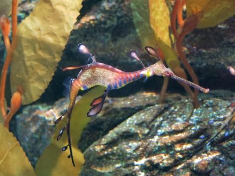 Sea Horse?! @ Siam Ocean World