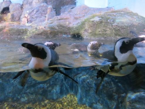 Penguins at Siam Ocean World