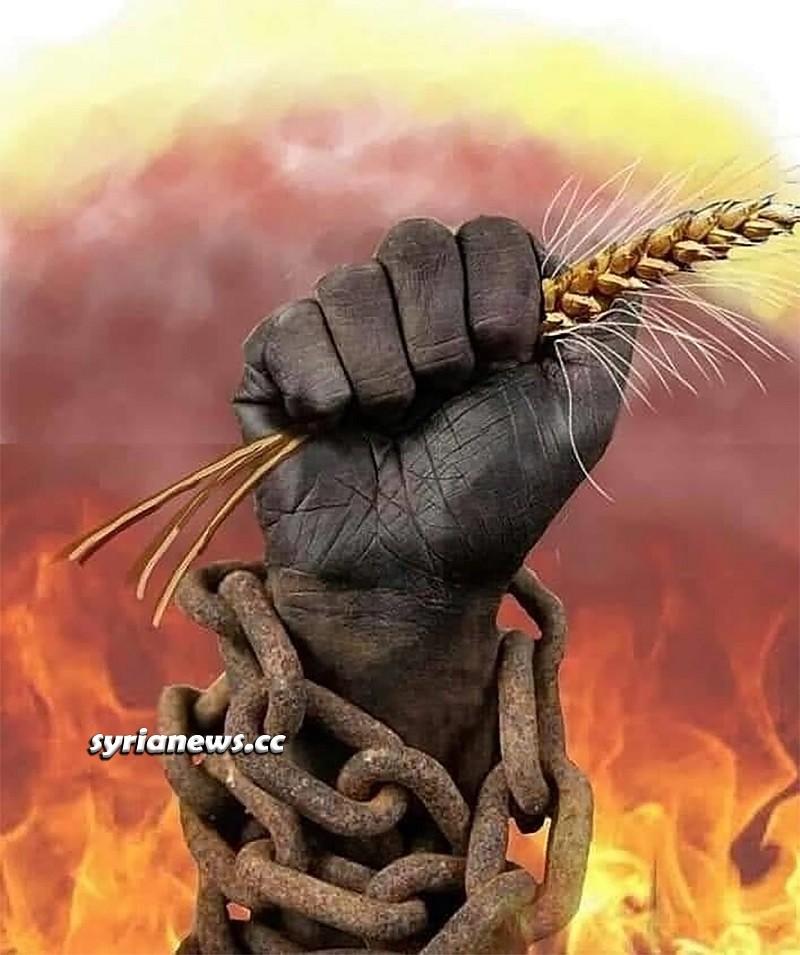 Syrian Wheat crops - القمح السوري