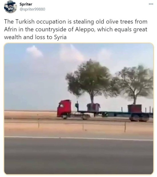 Spriter on Twitter: Erdogan forces stealing old olive trees from Syrian Afrin