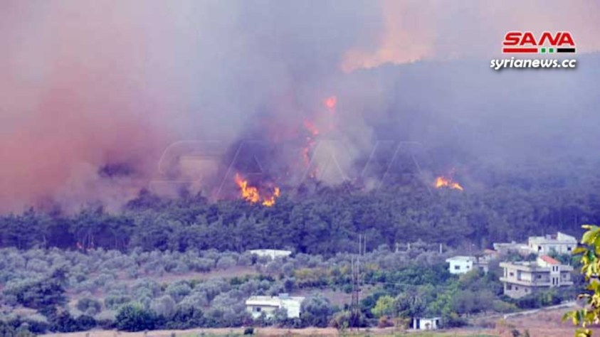 wildfire in Syria - Summer 2020