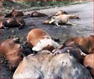 Saudi targeting Yemen livestock market-8