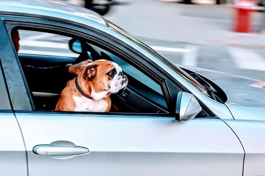 Come funziona il car sharing?