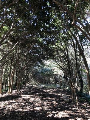 木のトンネル②