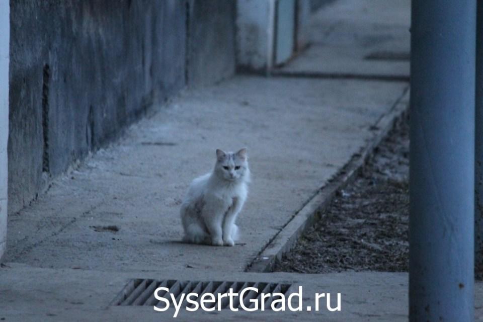 Среднестатистический сысертский кот
