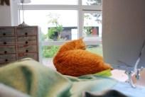 Noen ganger får jeg hjelp av Findus - som katter flest liker han å være der det skjer...