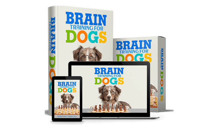Image result for brain training for dogs
