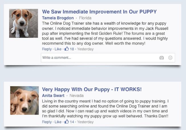 best online dog training course