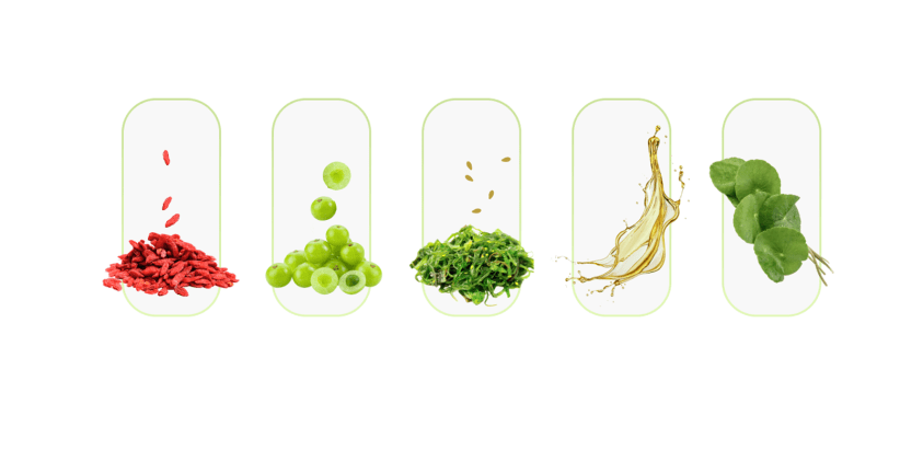 Bio Melt Pro Ingredients