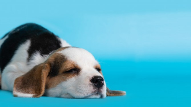 Dog Breathing Problems - Is There Any Complete Solution?