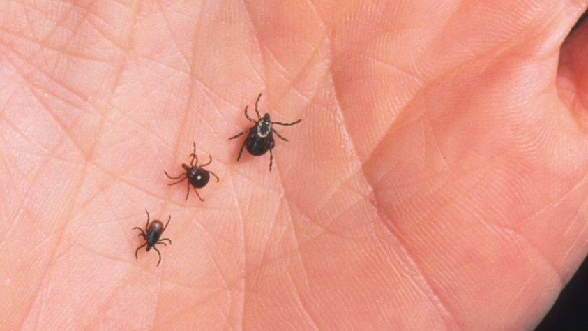 Lyme Disease: What To Eat And What To Avoid - A Complete Diet
