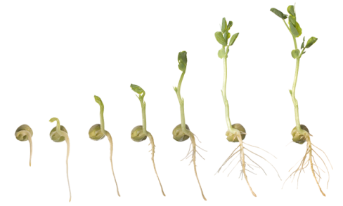Plant Growing