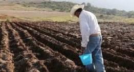 Que el Gobierno Federal quita 125 millones de pesos al sector agroalimentario