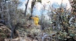 Bajo control total, un incendio en la zona de la Mariposa Monarca