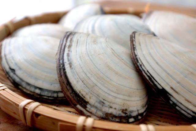 皿貝の砂抜き方法