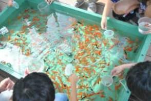 子供たちに人気の足立区生物園の金魚すくい