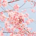 春の肌状態とスキンケア。春の肌トラブルを防ぐために注意しておきたい事。