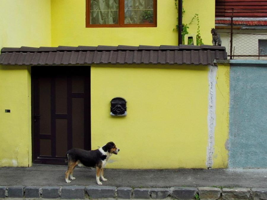 Egy kutya és egy macska (Bolgárszeg, Brassó, 2012)