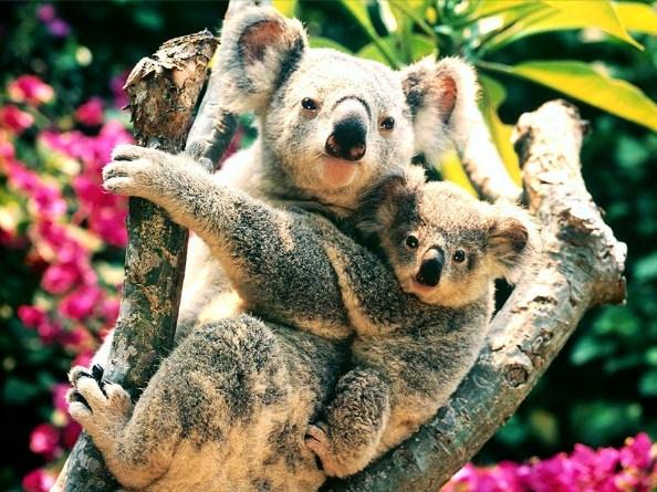 Ausztrália fotó