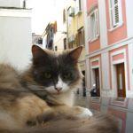 Macska nesztelen stressz a belvárosban. Autó tetején lazított.