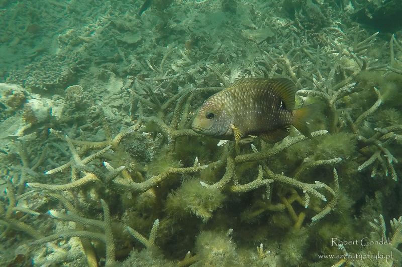 Podwodny świat na Mauritiusie