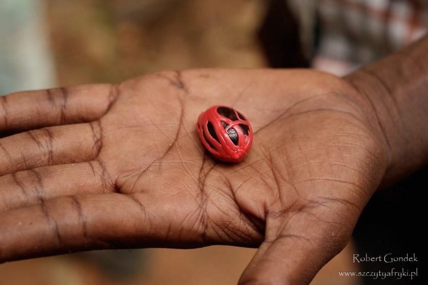 Gałka muszkatołowa na pokazowej plantacji przypraw na Zanzibarze
