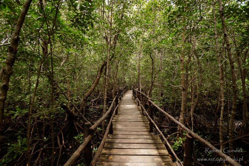 Las namorzynowy w Jozani Chwaka Bay National Park