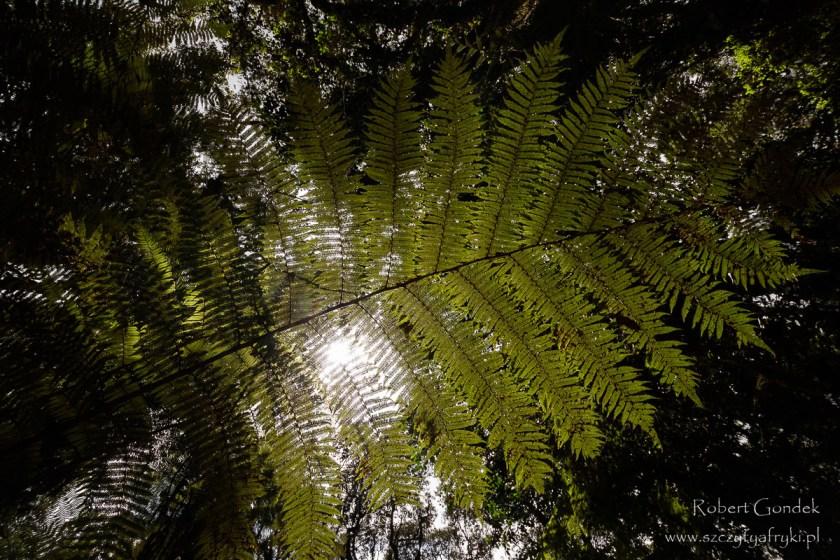 W lesie deszczowym