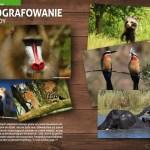 Fotografowanie przyrody - artykuł