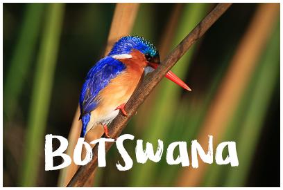 Najładniejsze zdjęcia z Botswany