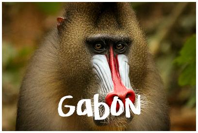 Najładniejsze zdjęcia z Gabonu