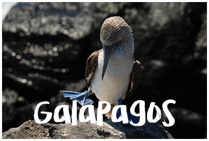 Najładniejsze zdjęcia z Galapagos