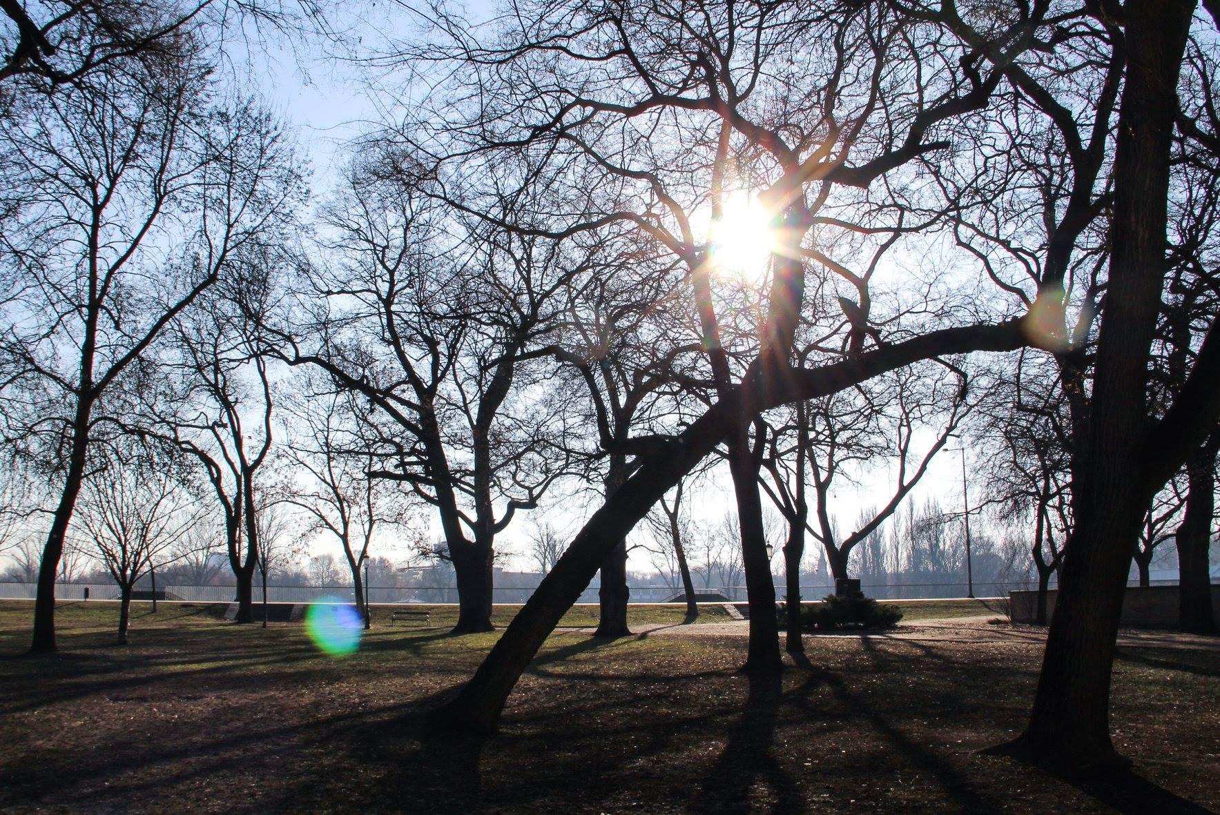 napsütés időjárás február nap napos stefánia fák park