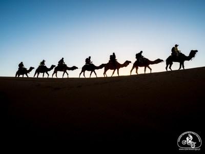 wycieczka na pustynię