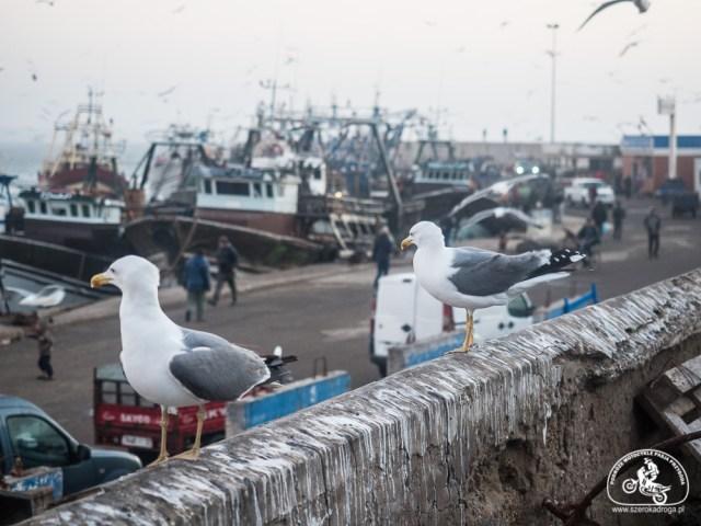 Essaouira port targ rybny Maroko