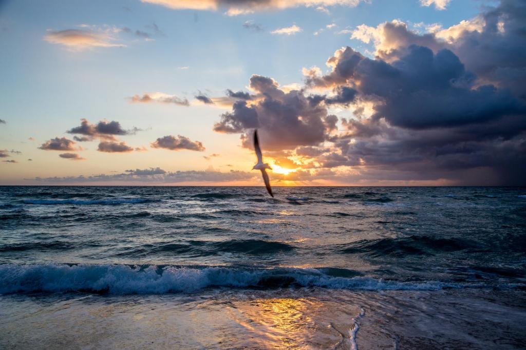 Apartment Mare Azur Miami Beach FL  Bookingcom