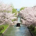 【京都の桜2017】4月9日~14日の桜コレクション