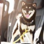 愛犬との初旅行に。とことんペット目線の「ホテル フォレストヒルズ那須」
