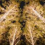 【京都ものづくり紀行vol1】ロームからの感謝の想い、温かな光を地域に届ける「ロームイルミネーション」