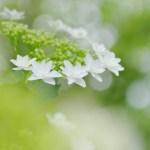 2019年度 「花の写真コンテスト」結果発表(部門2「梅雨のはなぶん」)